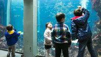 【下田海中水族館】チケット付きプラン イルカやアシカのショープログラムが満載〜