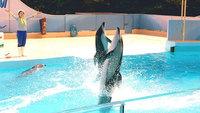 イルカやアシカのショープログラムが満載 【下田海中水族館】チケット付きプラン