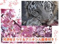河津桜&アニマルキングダム梅園付きプラン★コテージ