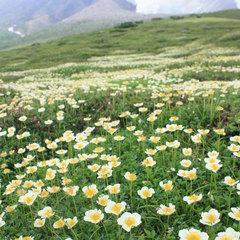 山の日記念【北の名産/天然ハッカ油スプレー&旭岳源水】付、旭岳の夏を楽しもう♪