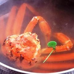 【冬旅】「出来立て茹でガニのみそは最高☆だ!」活間人蟹のゆでガニが姿で登場☆満足♪♪最高