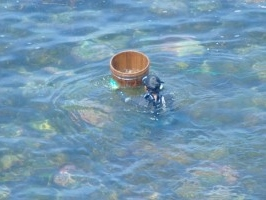 素潜漁解禁の一ヵ月限定!本物の赤ウニの味を。「生ウニプラン!活あわび付」