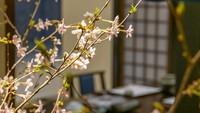【50歳からの大人旅】3つの特典付〇口コミ総合4.8の宿記念<ゆったり和室>因幡路会席◆花