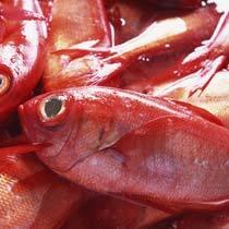 近海産極上金目鯛のしゃぶしゃぶかまや風【料理自慢】