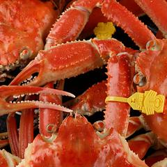 《越前かに一人1杯付!》 これぞブランド蟹と納得の越前かにフルコース