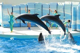 【12時までゆっくり滞在】大人気☆新江ノ島水族館へ行こう♪【大人入場券付】(食事なし)
