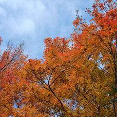 【紅葉ライトアップ鑑賞】幻想的な景色に心ふるえる瞬間♪ご夫婦やカップルで秋の長瀞へ感動旅