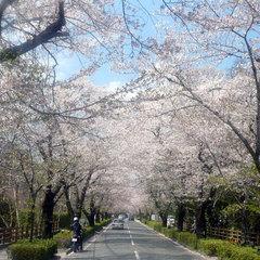【3月24日〜4月27日限定】春の長瀞から桃色の贈り物♪さくらライトアップ鑑賞&ロゼワイン付