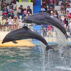 【松島水族館チケット付き】福井人気テーマパークへみんなでおでかけGOGO♪