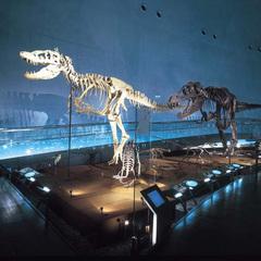 【春休み】家族に嬉しい♪特典付き「恐竜博物館チケットプレゼント」プラン★2食付