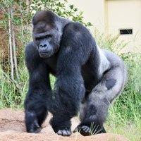 【FUN ! FUN ! ZOO】動物園デコレーションルーム -朝食・東山動植物園の観覧券付-