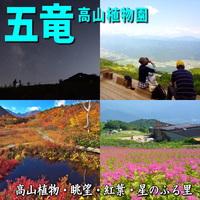 楽ちんゴンドラで登る【白馬五竜高山植物園】あなたの心にも花を咲かせましょう♪人気には理由があります