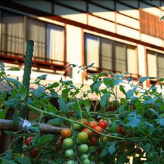 【スタンダード】リーズナブルに料理長こだわりの郷土料理を愉しむ/ふるさと会席プラン