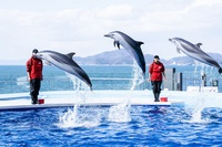 ◆体験と発見!癒しとロマンチックあふれる【四国水族館チケット付き】〜さぬき会席〜【夕朝食付】