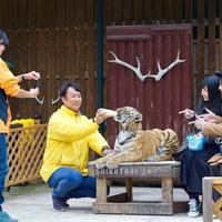 ◆動物とふれあい体験!しろとり動物園入場券とドルフィンセンター入場券付プラン《朝食付》
