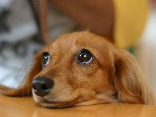 【素泊まり】浜坂温泉郷でペットとリフレッシュ!!ファミリーでBBQ◎ログハウス風コテージプラン☆
