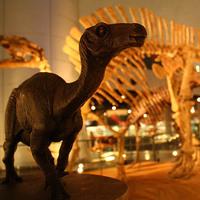 ◎【恐竜博物館常設展チケット付き 2食付プラン】広々ツインルーム(26平米)でゆったり!
