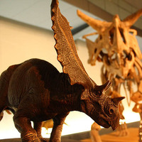 ◎【恐竜博物館常設展チケット付き 朝食付プラン】広々ツインルーム(26平米)でゆったり!