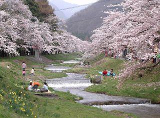 【お花見特典付】【1泊2食付】いなわしろの桜を楽しもう♪