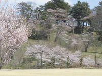 【GW】ポイント10倍!GWは満開の桜と雄大な猪苗代湖を楽しもう!<1泊2食付>