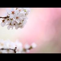 ≪春☆彡≫雄大な日本海を眺めながら天然温泉でゆったり 【1泊朝食付プラン】