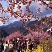新春特別 【御朱印帳付き旬食】プラン