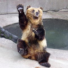 阿蘇カドリー・ドミニオン入園券付き♪いろんな動物たちが待ってます!◆朝食付き◆