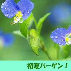 【期間限定】初夏バーゲン★気付けば夏はすぐそこ!!◆朝食付き◆