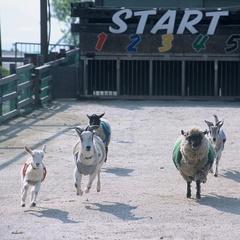 阿蘇ミルク牧場入場券付きプラン!元気いっぱい遊ぼう!◆朝食付き◆