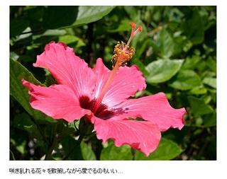 【朝食付】スタンダードプラン【楽天x久米島特集記念】