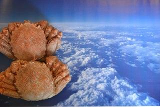 【スタンダード/料理イチオシ2食付】タコ・カニ…おまかせ料理で北の海の幸を堪能
