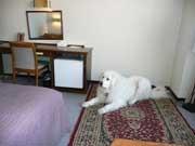 大型犬もOK♪ペットと一緒に宿泊できます♪ 2食付プラン