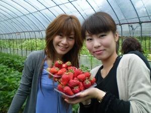 5月末まで限定、超お得!イチゴのおみやげ付きプラン