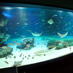 【サンシャイン水族館チケット付プラン】都内観光に便利!素泊まりプラン