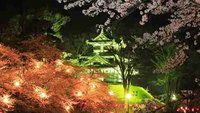 【期間限定運行】日本三大夜桜「高田城址公園」までバス直行!夜桜バスプラン