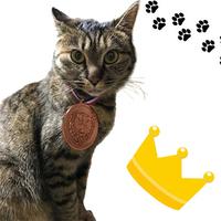 【お客様感謝プラン】ありがとニャン♪看板猫ランキング銅メダル獲得記念プラン☆(2食付)