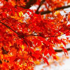◆秋本番◆色づく紅葉…秋の貴船を満喫♪京風会席!<1泊2食付>≪現金特価≫