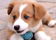 【かわいいペットと一緒にお泊り出来る宿】ペットも家族みんな一緒に温泉旅行