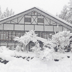 【冬期間限定】スノートレッキング体験!新雪の古代樹の森を自分の足で満喫してみませんか?