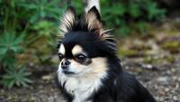 ゴールデンウィークペット(小型室内犬:5kg以下)同伴連泊プラン