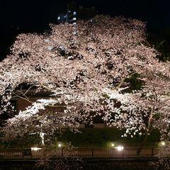【1日3組限定】伊豆の桜めぐりプラン★お一人様3,000円引き♪さらに桜の特典付き