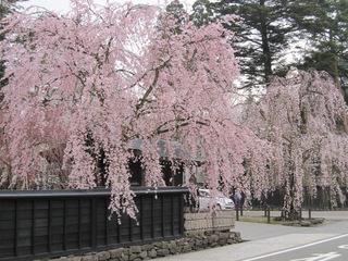 【角館夜桜満喫】春の特選和膳1泊2食スタンダードプラン