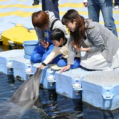 イルカと出会える旅・ドルフィンセンター入場券付プラン