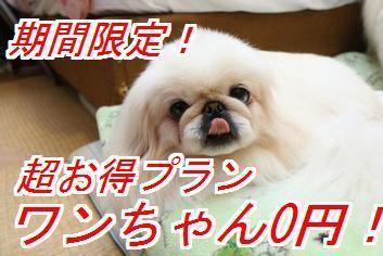 ワンちゃん0円 憧れの露天風呂付客室&個室お食事処