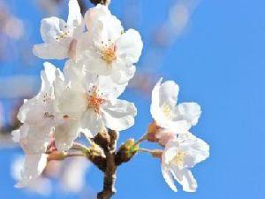 【春旅】エコでお得な2泊3日プラン【おかずも全ておかわり自由の和洋朝食付】※現金支払限定