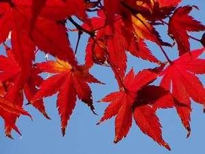【秋旅】エコでお得な2泊3日プラン【おかずも全ておかわり自由の和洋朝食付】※現金支払限定