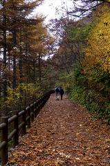 森林セラピーロードを散策して、体をリフレッシュ!!