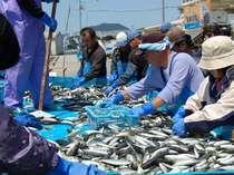 【 獲れたて!ピッチピチ 】<隠岐の恵みがたっぷり♪>新鮮な海の幸を桶盛りで贅沢に召し上がれ。