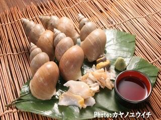 【美肌県しまねの地酒・県産米プレゼント】【好評の食材】【人気の巻貝】白ばい貝のお造り付プラン
