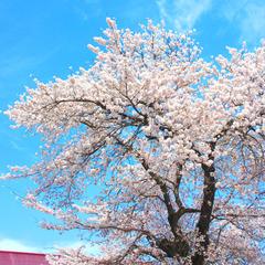 【春の味覚】春〜初夏の山菜狩り★3食付きプラン♪